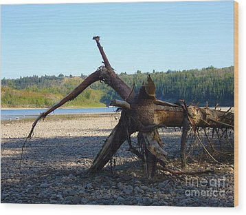 Wood Print featuring the photograph Canadian Driftwood by Jim Sauchyn