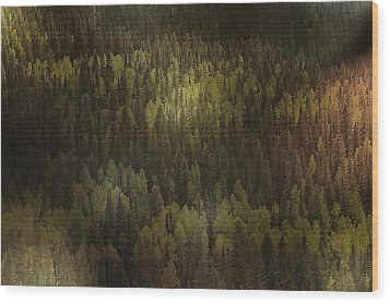 Canadian Forest - The Woods Are Lovely Dark And Deep Wood Print by Christine Till