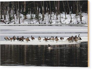 Canadian Gees At Farrington Lake Wood Print