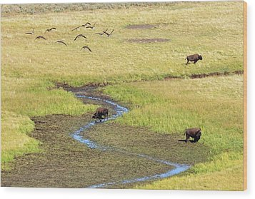 Canadian Geese And Bison, Yellowstone Wood Print by Brian Bruner