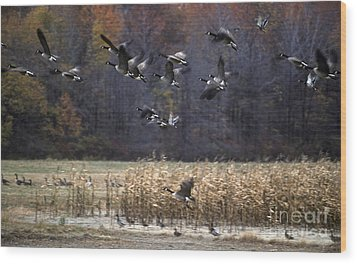 Wood Print featuring the photograph Canadian Geese In Flight by Craig Lovell