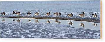 Canadian Geese Line Up Wood Print by Mary Gaines