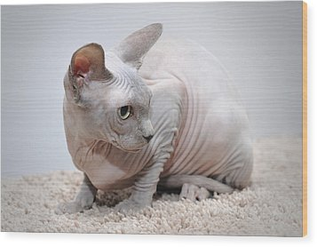Canadian Sphynx Cat Wood Print by Waldek Dabrowski