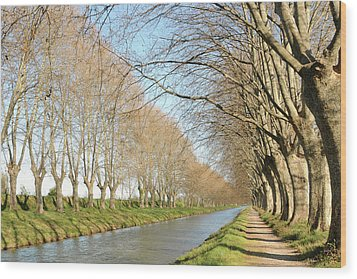 Canal With Tree Wood Print by Teocaramel