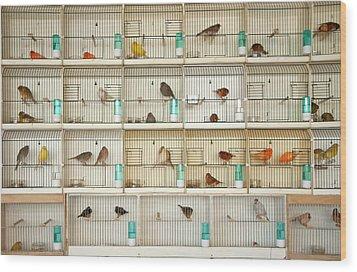 Canary Birds Wood Print by Carlo A