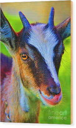 Candy Goat Wood Print by Mariola Bitner