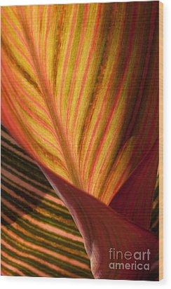 Canna Wood Print by Annette Weiner
