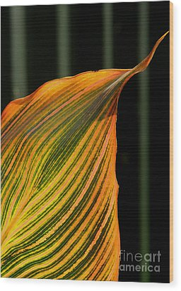 Wood Print featuring the photograph Canna Leaf by Nareeta Martin