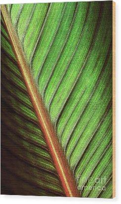 Canna Leaf Wood Print by Neil Overy