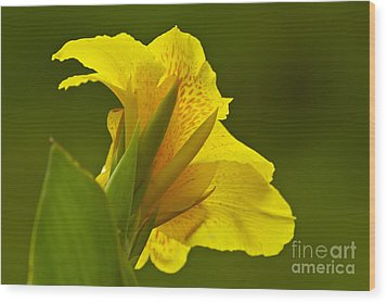 Canna Lily Wood Print by Heiko Koehrer-Wagner