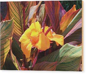 Canna Wood Print by Raymond Robinson