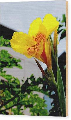 Canna Yellow Flowers. Wood Print by Pitakpong Chansri