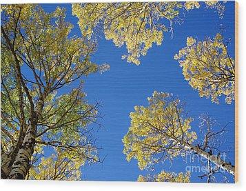 Canopy Wood Print by Vicki Pelham