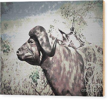 Cape Buffalo Wood Print by Arne Hansen