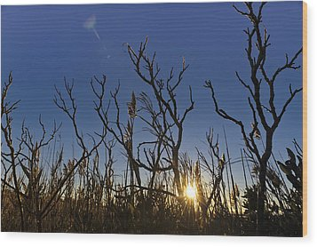 Cape Cod Marsh At Sunset Wood Print by Marianne Campolongo