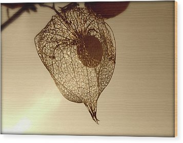 Wood Print featuring the photograph Cape Gooseberry by Emanuel Tanjala