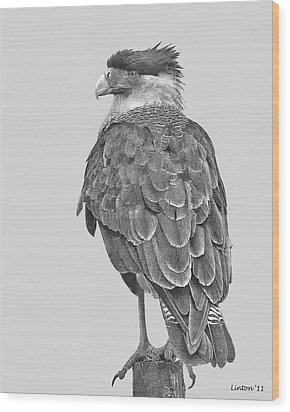 Caracara Wood Print by Larry Linton