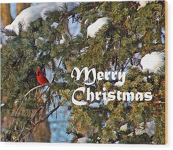 Cardinal Christmas Card Wood Print by Aimee L Maher Photography and Art Visit ALMGallerydotcom
