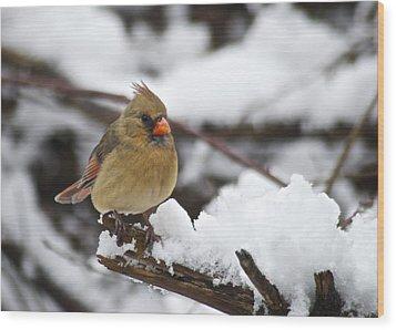 Cardinal Female 3679 Wood Print by Michael Peychich