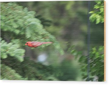 Wood Print featuring the photograph Cardinal In Flight by Thomas Woolworth
