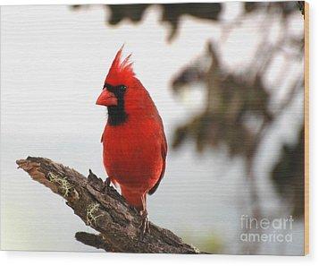 Cardinal In Hawaii Wood Print by Johanne Peale