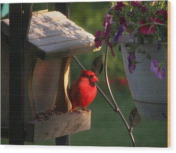 Cardinal Wood Print by Judy Via-Wolff