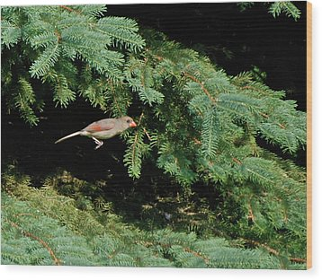 Wood Print featuring the photograph Cardinal Just A Hop Away by Thomas Woolworth