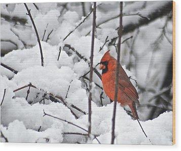 Cardinal Male 3669 Wood Print by Michael Peychich