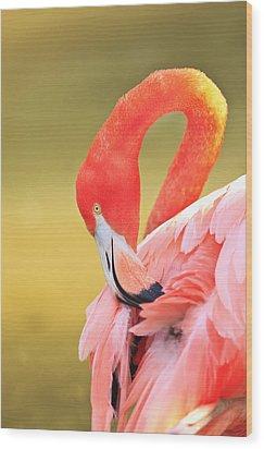 Caribbean Flamingo Phoenicopterus Rube Wood Print by Stuart Westmorland
