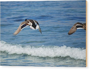 Carmel Bay And Duck In Flight Wood Print by Harvey Barrison
