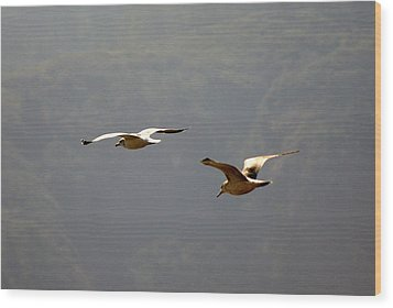 Carmel Birds In Flight  Wood Print by Harvey Barrison