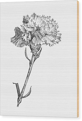 Carnation Wood Print by Christy Beckwith