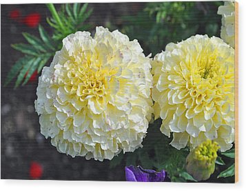 Carnations Wood Print by Tikvah's Hope