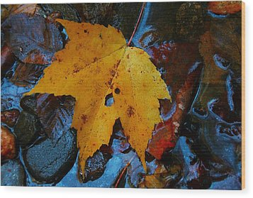 Carolina Blue Reflections Wood Print by Christine Annas