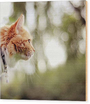 Cat And Bokeh Background Wood Print by Maria Kallin