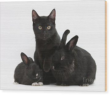 Cat And Rabbits Wood Print by Mark Taylor