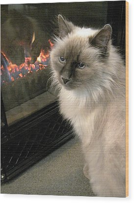 Cat And The Fireplace Wood Print by Patricia Drohan