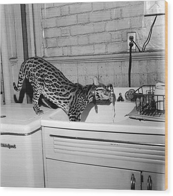 Cat At The Tap Wood Print by Sherman