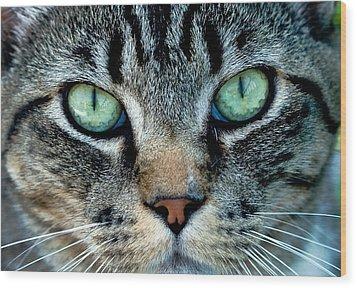 Cat Face Wood Print