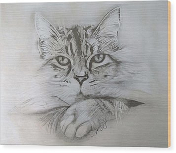 Cat I. Wood Print by Paula Steffensen
