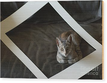 Cat In A Frame Wood Print by Micah May