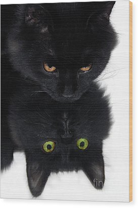 Cat In The Mirror Wood Print by Graham Taylor