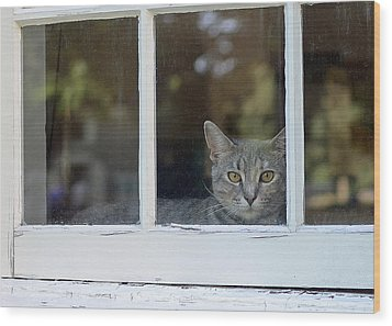 Cat In The Window Wood Print by Lisa Phillips