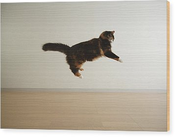 Cat Jumping In Air Wood Print by Junku