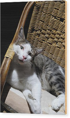 Cat Lying On Wooden Children Chair Wood Print by Sami Sarkis