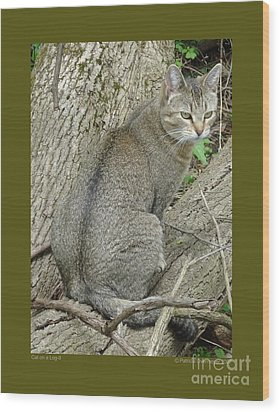 Cat On A Log-ii Wood Print by Patricia Overmoyer
