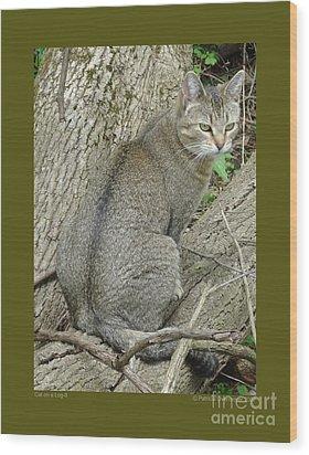 Cat On A Log-ii Wood Print