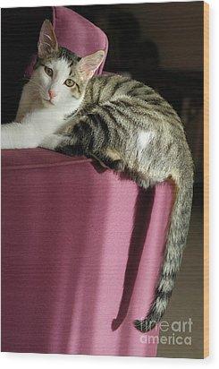 Cat On Sofa Wood Print by Sami Sarkis
