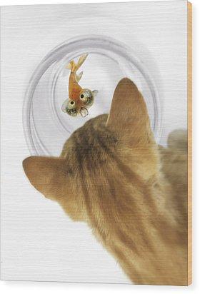 Cat Peering Into Fishbowl Wood Print by Darwin Wiggett