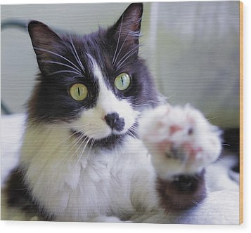 Cat Reaches For Camera Wood Print by Lori Coleman